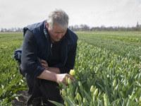 """Jan Ligthart i plantacja tulipanów """"Maria Kaczyńska"""", fot.Wiktor Dąbkowski"""