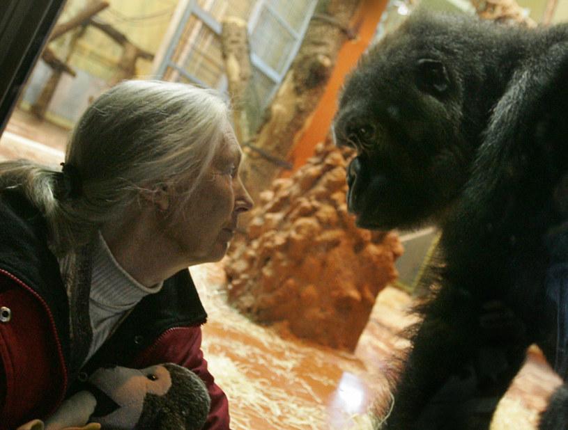 Jane Goodall całe życie poświęciła zwierzętom. Teraz chce chronić klimat /East News