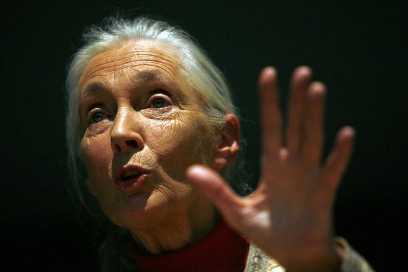 Jane Goodall nie ma optymistycznej przepowiedni dla świata, jeśli nie zaczniemy dbać o środowisko /Associated Press / ALESSANDRO DELLA BELLA /East News