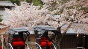 Japonia - transport, poruszanie się po kraju