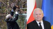 Jarosław Kaczyński nie może spać w nocy! Przez kotkę!