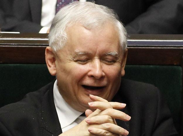 Jarosław Kaczyński opiekuje się trzema kotami /Stefan Maszewski /Reporter