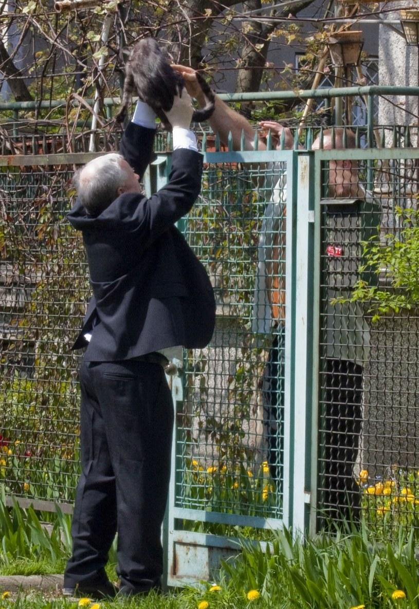 Jarosław Kaczyński to słynny miłośnik kotów! /- /East News