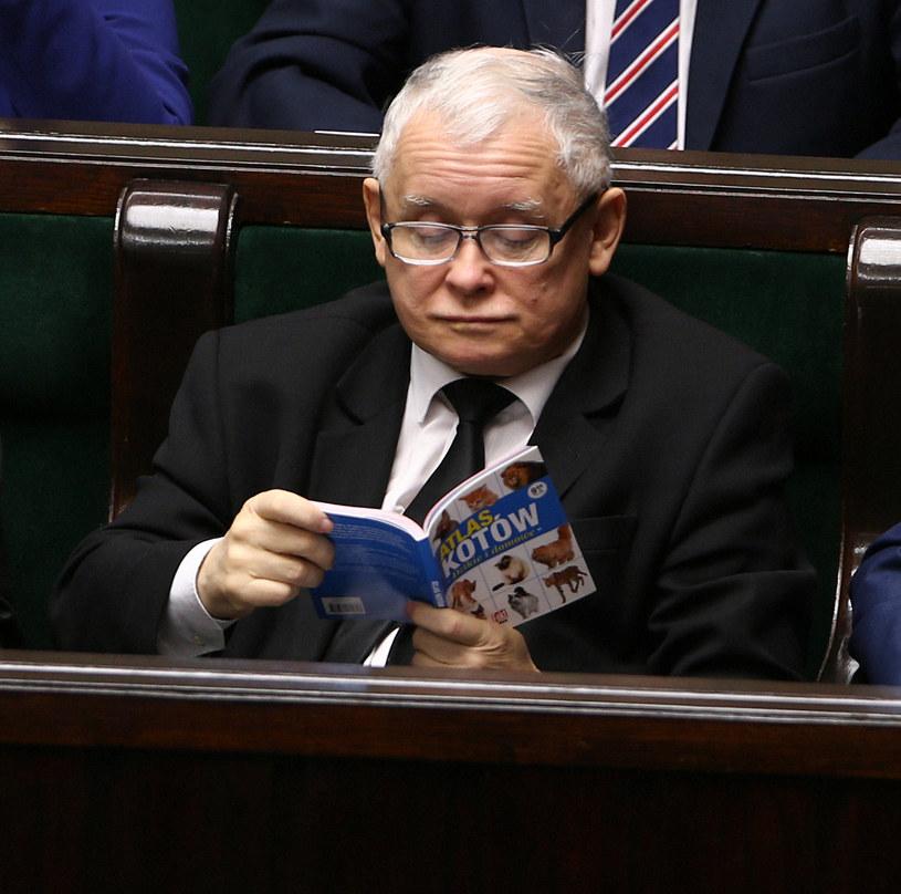 """Jarosław Kaczyński w Sejmie z """"Atlasem kotów"""" /Krystian Maj /Agencja FORUM"""