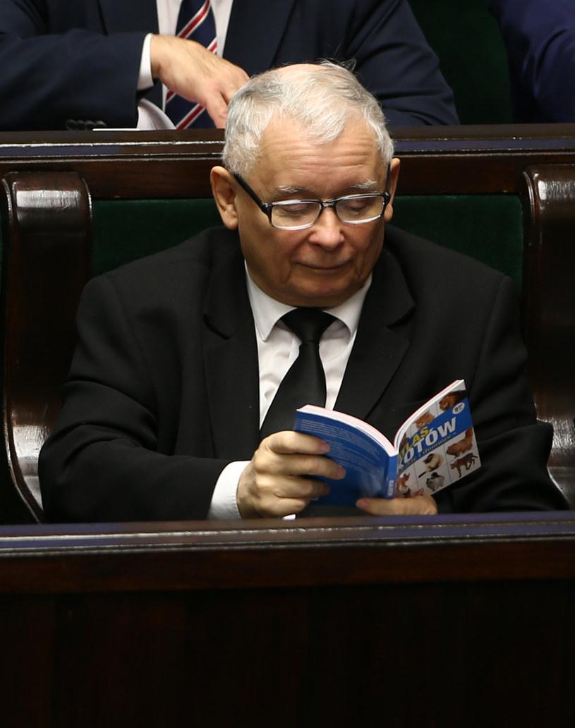 """Jarosław Kaczyński w Sejmie zaczytywał się w """"Atlasie kotów"""" /Krystian Maj /Agencja FORUM"""