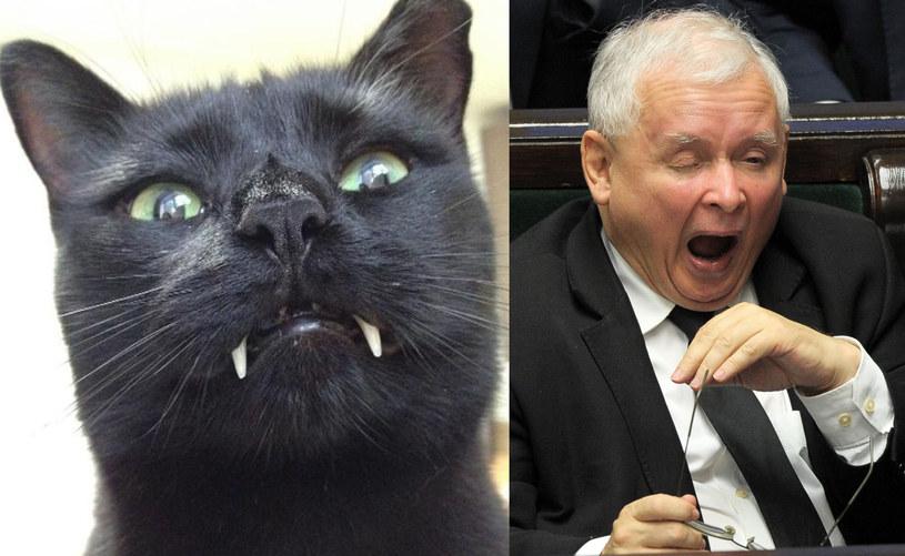 Jeden z kotów Jarosława Kaczyńskiego jest czarny /Jan Bielecki /East News
