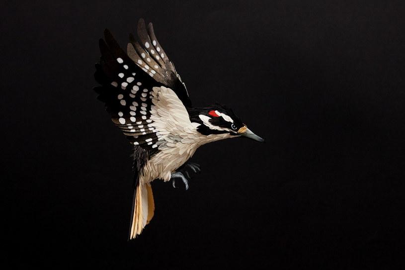 jeden z papierowych ptaków Diany Beltran Herrery /dianabeltranherrera.com (Victoria Holguin) /Sztukatulka.pl
