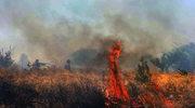 Jedna ofiara pożaru lasu w Grecji