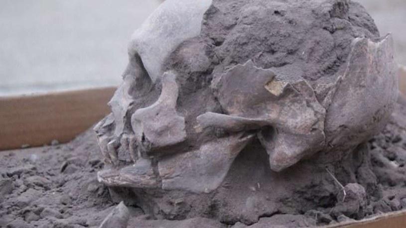 Jedna z czaszek znalezionych w Ekwadorze /materiały prasowe