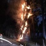 Jedno z najstarszych drzew w Polsce w ogniu. Dąb może runąć