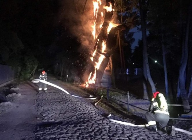 Jedno z najstarszych drzew w Polsce w ogniu /Jednostka Ratowniczo-Gaśnicza nr 17 PSP w Warszawie /facebook.com
