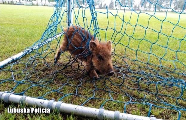 Jedno ze zwierząt coraz mocniej zaciskało sznurek na szyi i zaczynało się dusić /Policja