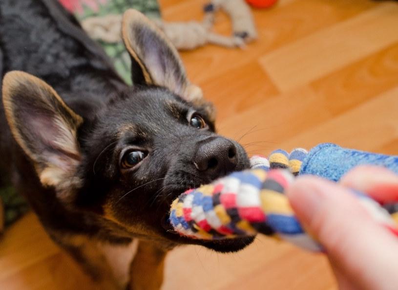 Jednym ze sposobów na niepokój podczas burzy jest wciągnięcie psa do zabawy