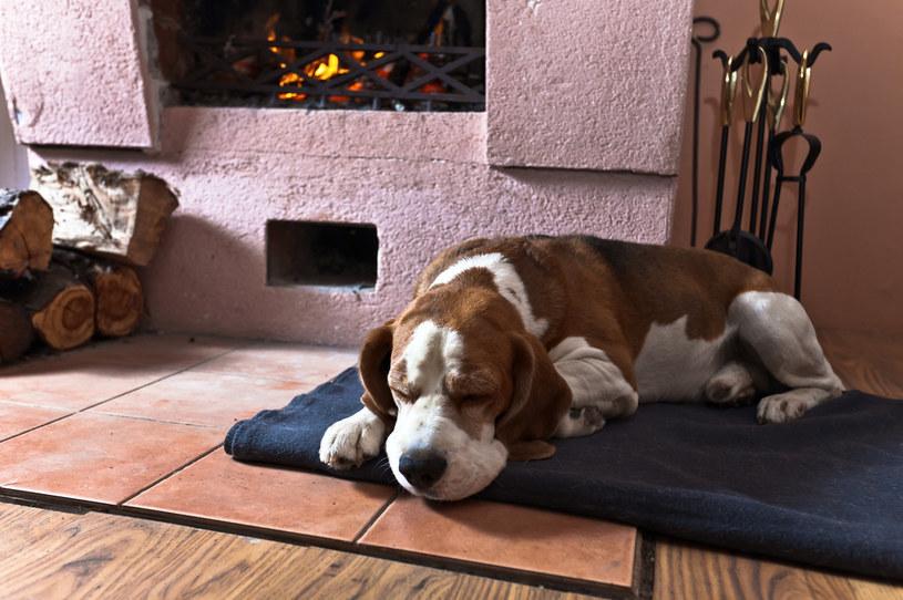Jednym ze zwierząt, które pomogą zodiakalnym Pannom strzec miru domowego, są psy /123RF/PICSEL