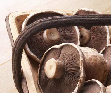 Jedz więcej grzybów, jeśli chcesz uniknąć demencji i Alzheimera