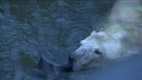 Jedzą lody i bawią się w wodzie