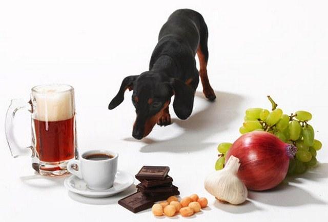 Jedzenie trujące dla zwierząt /© Photogenica