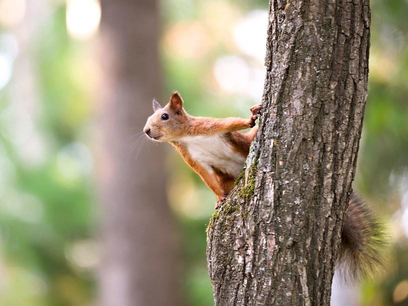 Jedzenie wiewiórek nie jest dobrym pomysłem /123RF/PICSEL