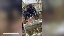 Jelonek zaklinował się w płocie. Pomogli mu strażacy i policjanci z Ohio