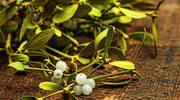 Jemioła – naturalny lek na kłopoty z ciśnieniem