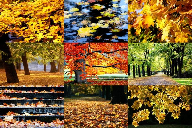 Jesień już przyszła! /123RF/PICSEL