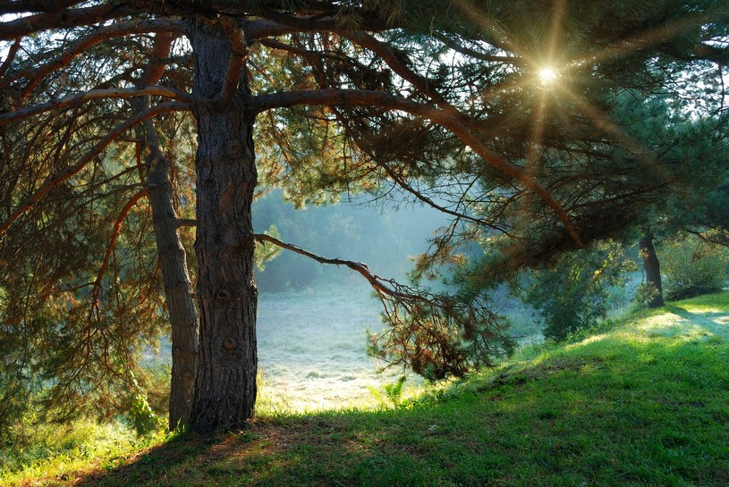 Jesień pokaże nam swoje łagodniejsze /123RF/PICSEL