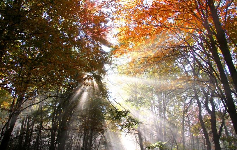 Jesień też może być piękna... /123RF/PICSEL