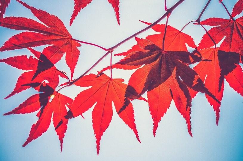 Jesień to czas, w którym prawie wszystkim obniża się nastrój /Unsplash