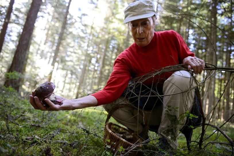 Jesien to wielkie grzybobranie /AFP