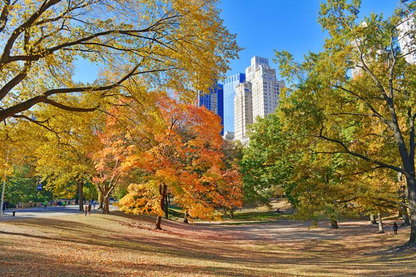 Jesień w Central Parku /123RF/PICSEL