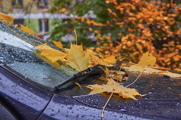 Jesień w pełni! Termometry pokażą dziś maksymalnie 13 stopni C. /Shutterstock