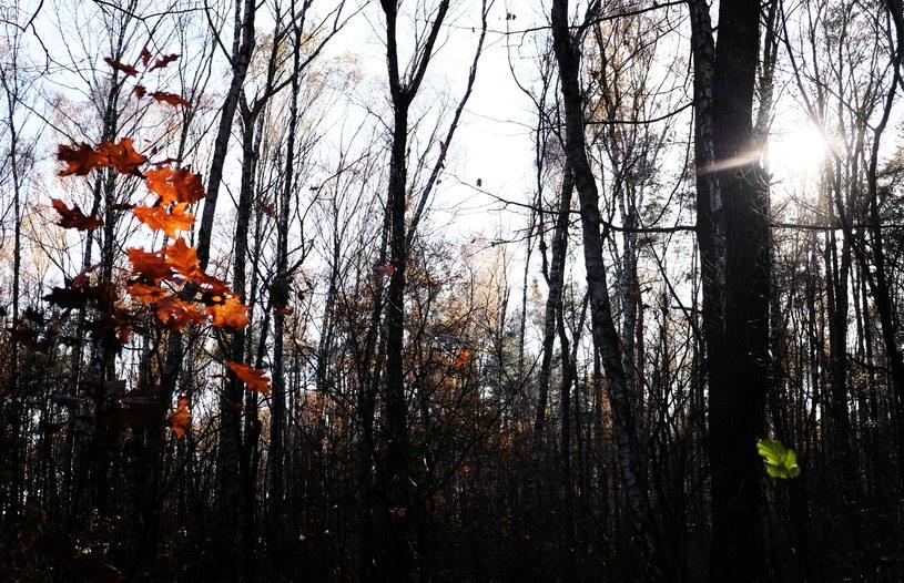 Jesień, zdjęcie ilustracyjne /Małgorzata Kołcz /East News