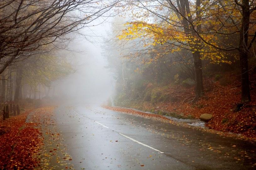 Jesień /123RF/PICSEL