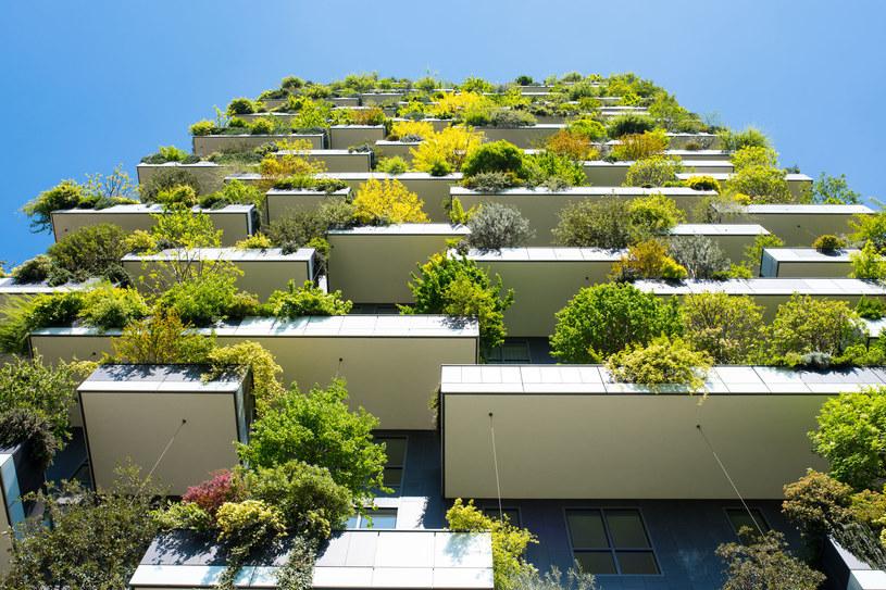 Jesienią kwiaty trzeba pielęgnować ze szczególną ostrożnością. W tym okresie warto zwracać uwagę na wiele czynników, aby cieszyć się wspaniale udekorowanym balkonem /123RF/PICSEL