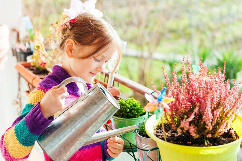 Jesienią nie należy zbyt intensywnie podlewać roślin doniczkowych /123RF/PICSEL