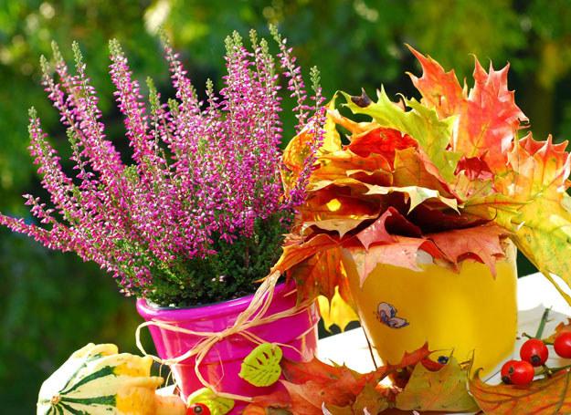 Jesienią ogród również może być piękny /123RF/PICSEL