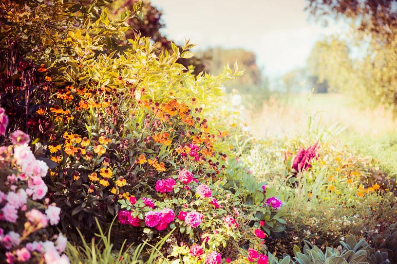 Jesienią ogród wygląda pięknie, ale mróz może mu szkodzić! /123RF/PICSEL