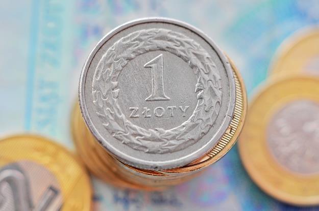 Jesienią polska waluta będzie interesowała inwestorów bardziej niż euro /©123RF/PICSEL