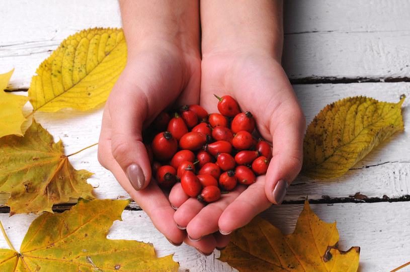 Jesienią zaczyna się sezon na owoce dzikiej róży /123RF/PICSEL