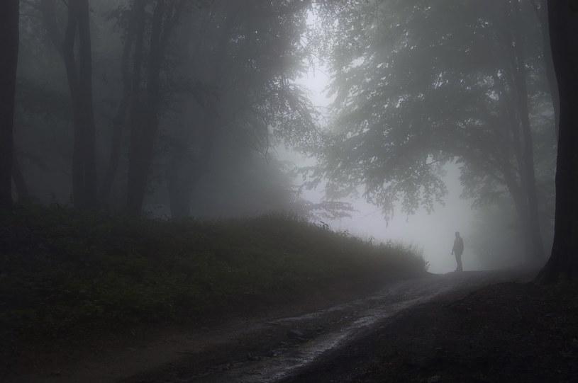Jesienne mgły /123RF/PICSEL