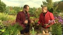 Jesienne sadzenie roślin. Jak się do tego zabrać?