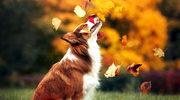 Jesienny spacer z psem
