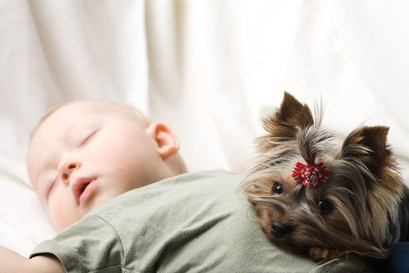 Jeśli mamy małe dziecko, warto rozważyć szczeniaka /123RF/PICSEL