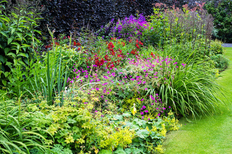 Jeśli marzy Ci się piękny zapach, przy zakupie roślin, najlepiej je powąchać. Najbardziej aromatyczne to: heliotrop, maciejka, niektóre surfinie, najczęściej niebieskie, granatowe oraz białe /123RF/PICSEL