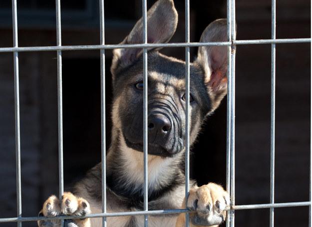 Jeśli nie możesz przygarnąć psa ze schroniska, a chcesz pomóc, wesprzyj naszą zbiórkę! /123RF/PICSEL