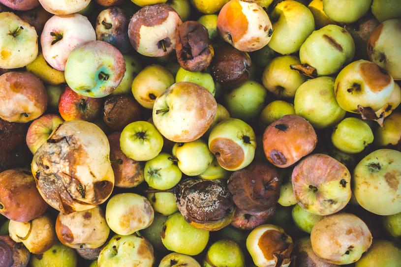 Jeśli wiesz, że nie zjesz ich od razu - przetwórz szybko świeże jabłka /123RF/PICSEL