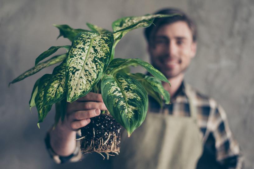 Jeśli zareagujesz szybko, wiele domowych roślin uda ci się uratować /123RF/PICSEL