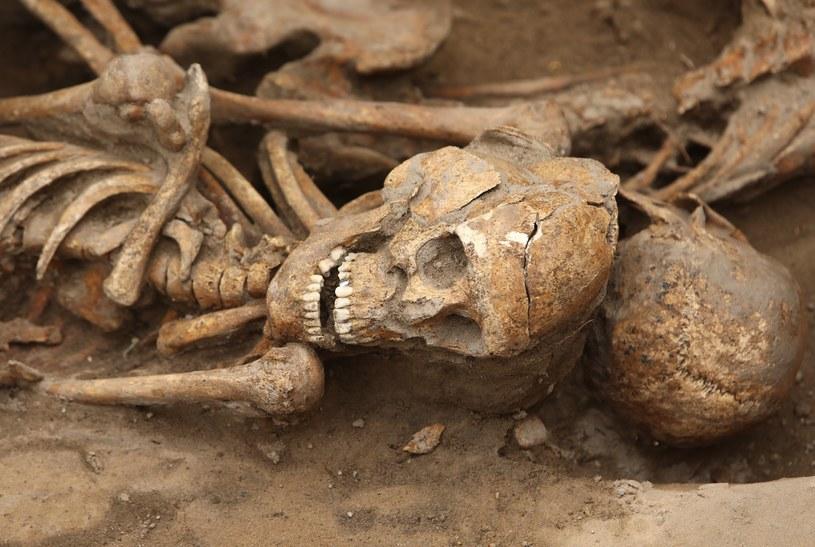 Jest wysoce prawdopodobne, że w ziemi znajdzie więcej szczątków (zdjęcie ilustracyjne) /Stanisław Kowalczuk /East News