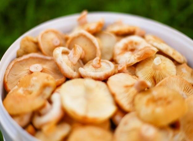 Jeszcze przez kilka tygodni możemy cieszyć się bogactwem grzybów /123RF/PICSEL