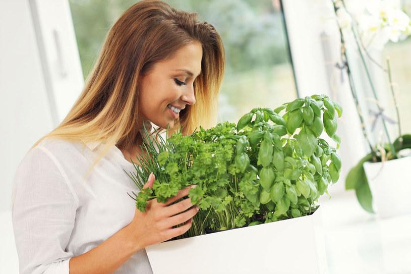 Jeżeli dokucza ci osłabienie, miewasz kłopoty z koncentracją albo zawroty głowy, użyj mocy roślin! /123RF/PICSEL